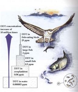 میزان د.د.ت موجود در بدن جانداران و محیط